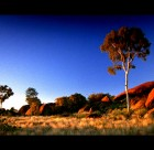 Emu and Bush Turkey dreaming